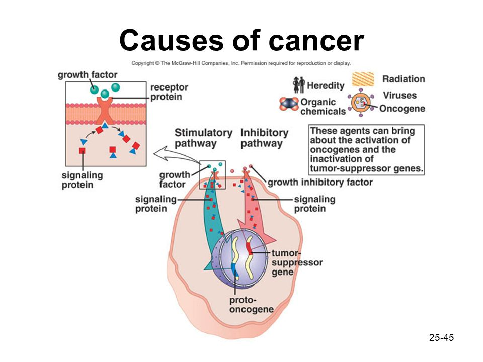 what is the relationship environmental factors and cancer