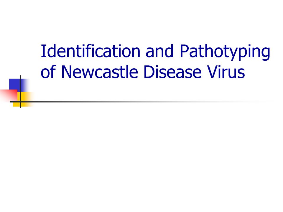 thesis on newcastle disease virus Our study demonstrates the repeated isolation of vaccine-derived newcastle disease viruses from  the presence of newcastle disease virus of low  thesis] athens.