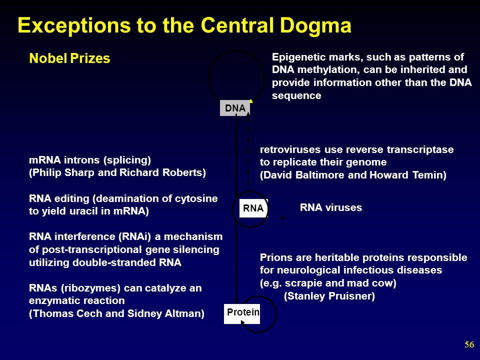 Central Dogma Of Biology Worksheet Checks Worksheet