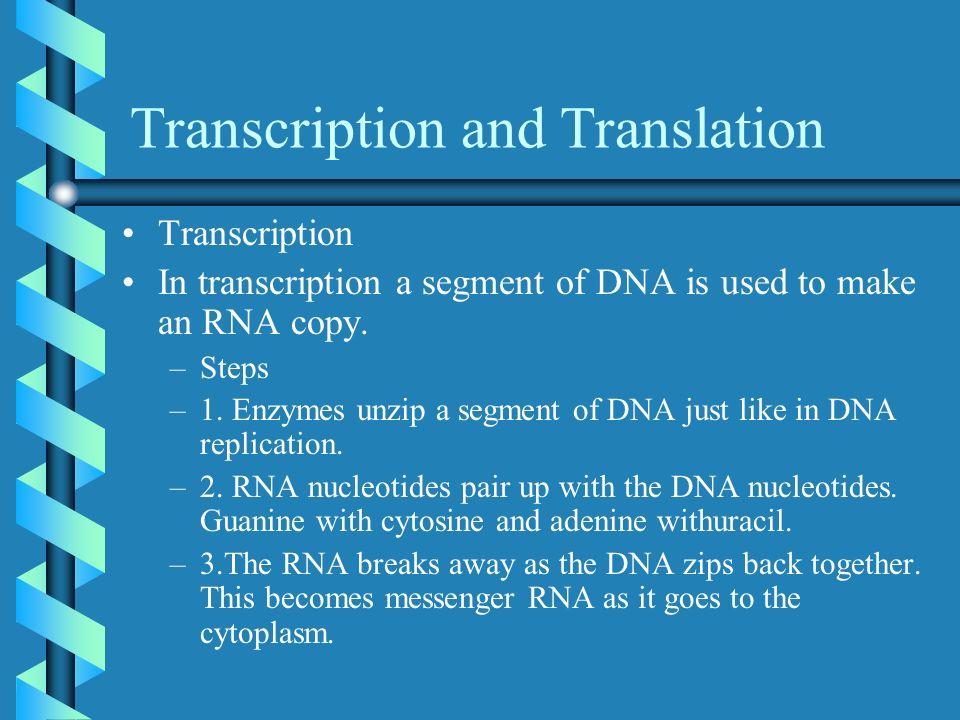 Transcription and Translation