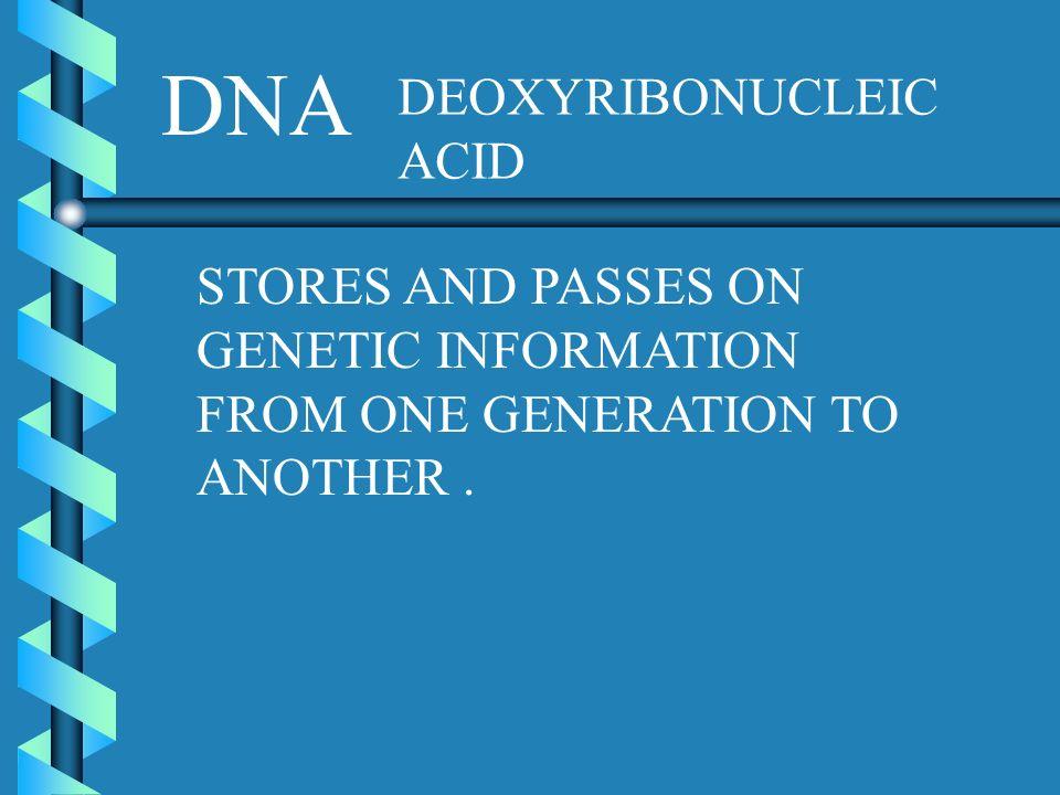 DNA DEOXYRIBONUCLEIC ACID