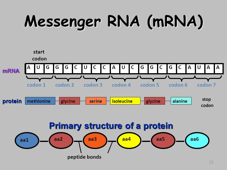 Historical Experiments Related To Dna also 34 Dna Structurer And Replication in addition R11 16 DNAsequencing together with Pcr   Dystrophin Gene in addition Epige ics. on nucleotides and bases