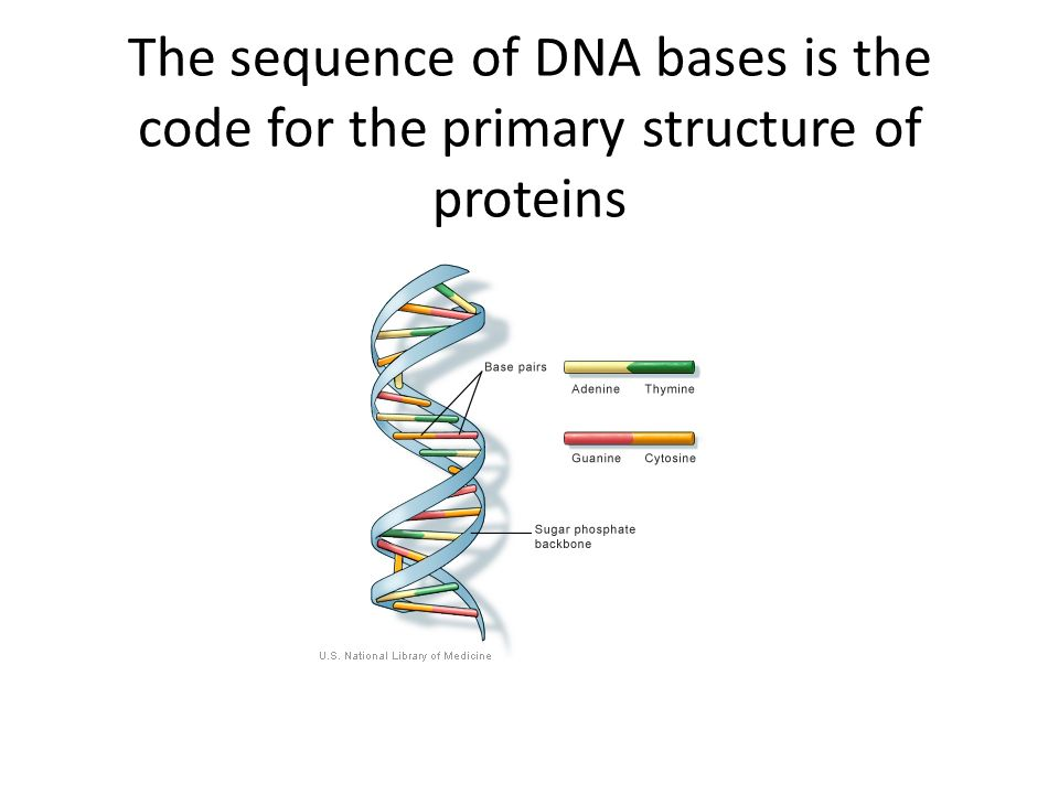 The human genome of is found where in the human body ...