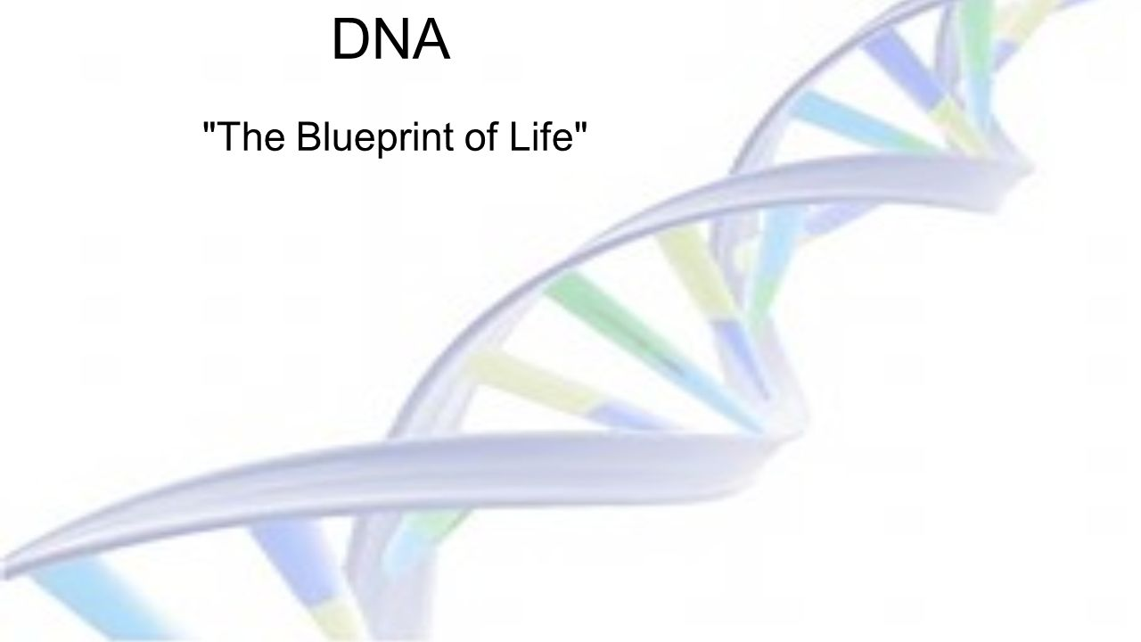 Dna the blueprint of life ppt video online download 1 dna malvernweather Image collections