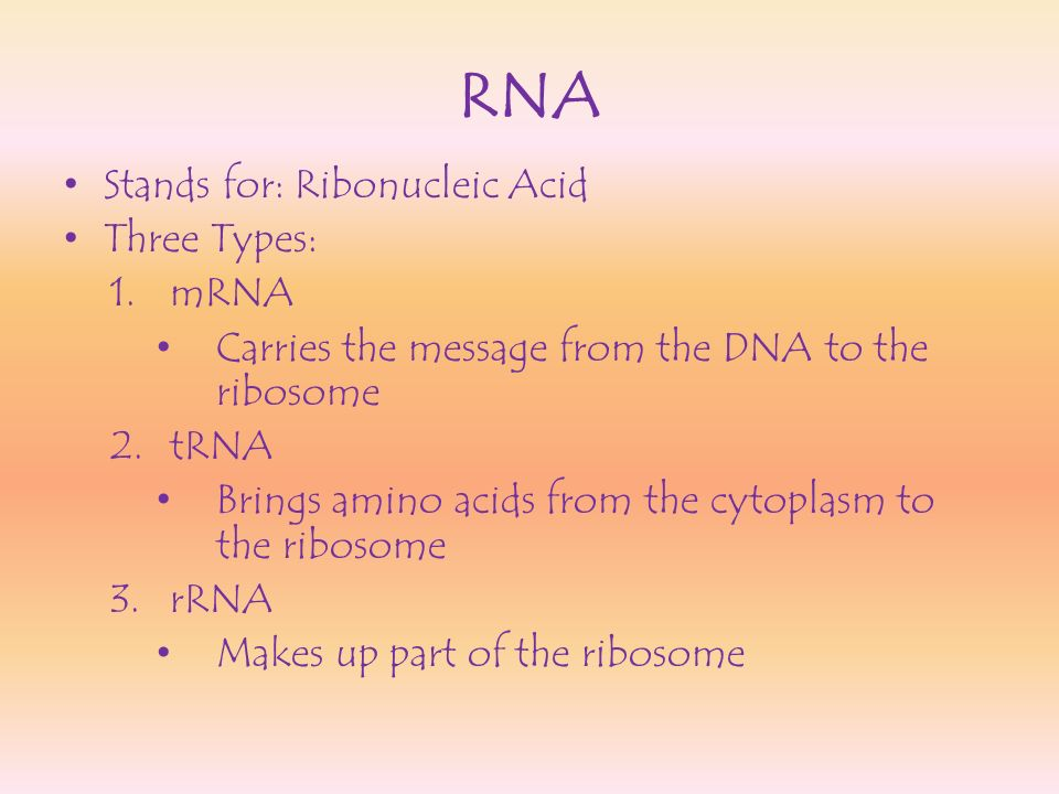 RNA Stands for: Ribonucleic Acid Three Types: mRNA
