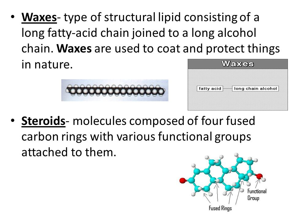 Waxes- type of structural lipid consisting of a long fatty-acid chain joined to a long alcohol chain. Waxes are used to coat and protect things in nature.