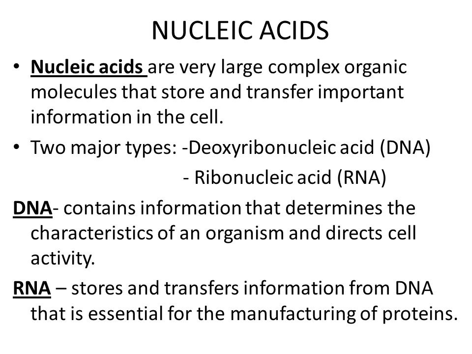 NUCLEIC ACIDS Nucleic acids are very large complex organic molecules that store and transfer important information in the cell.