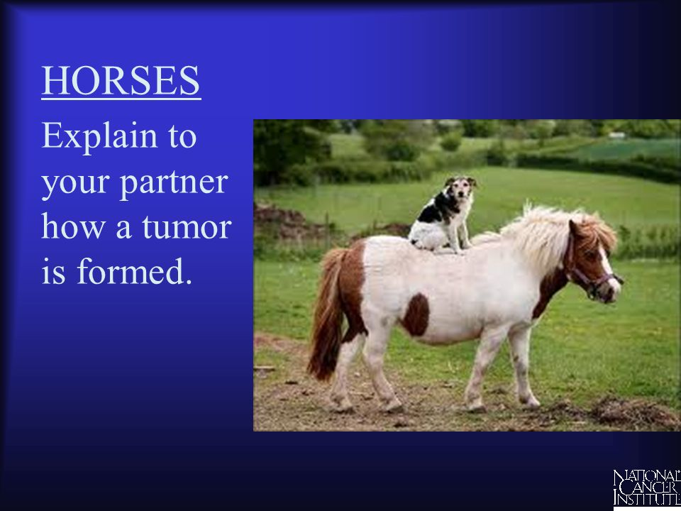 HORSES Explain to your partner how a tumor is formed.