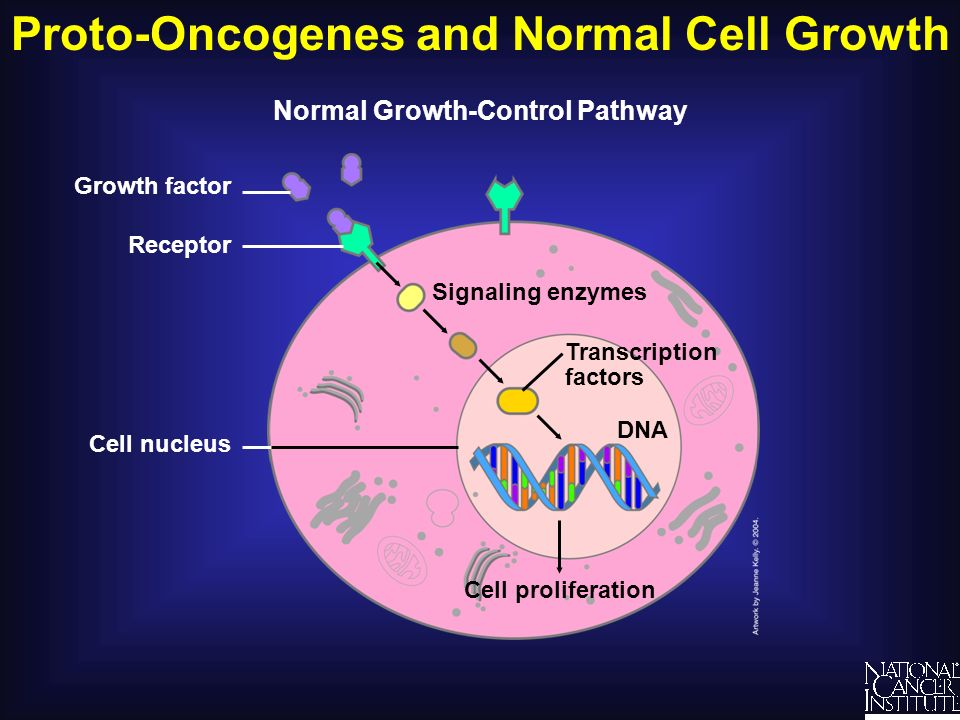 Proto-Oncogenes and Normal Cell Growth