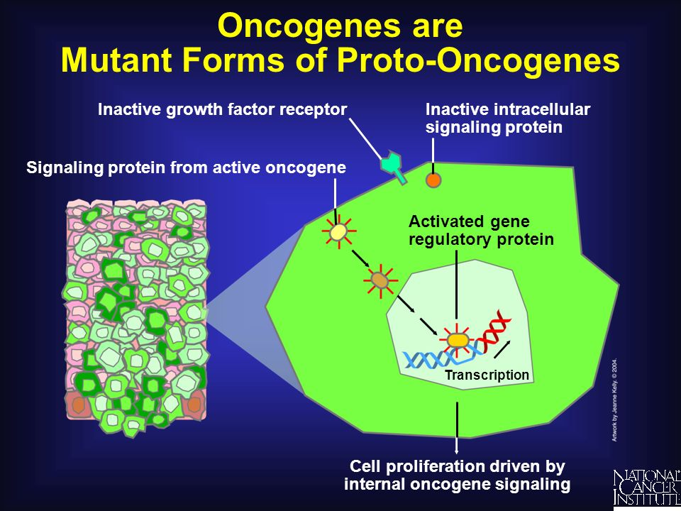 Oncogenes are Mutant Forms of Proto-Oncogenes
