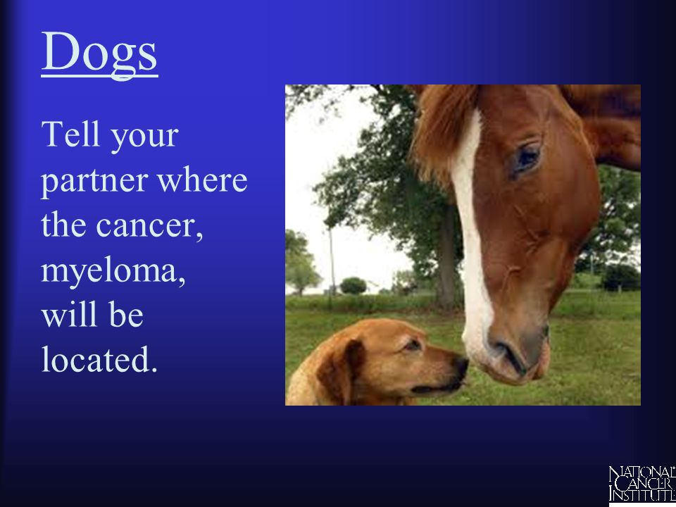 Dogs Tell your partner where the cancer, myeloma, will be located.