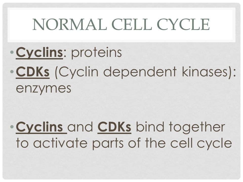 Normal Cell Cycle Cyclins: proteins