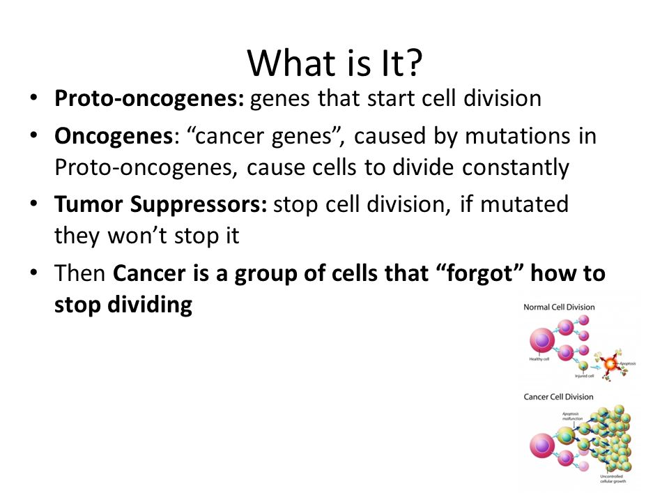 What is It Proto-oncogenes: genes that start cell division