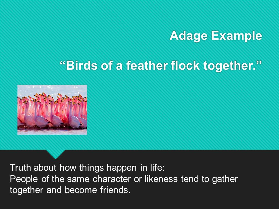 birds of same feather flock together