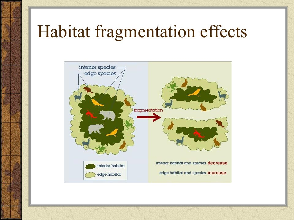 habitat fragmentation Types & causes fragmentation in the us only about 99 % of forests are surrounded by a fully forested area (us forest service 2002) fragmentation is affecting about 80 to 90 percent of animal species around the us (us forest service 2002) abstract effects of fragmentation many negative effects.