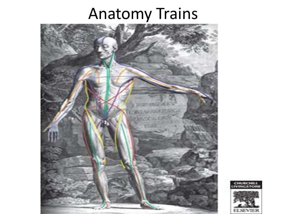 Anatomy trains myers