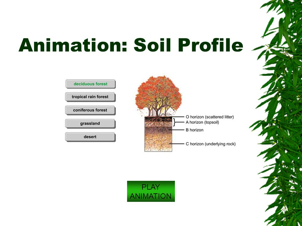 Ecosystems and soils chapter 3 brooks cole publishing for Soil profile video