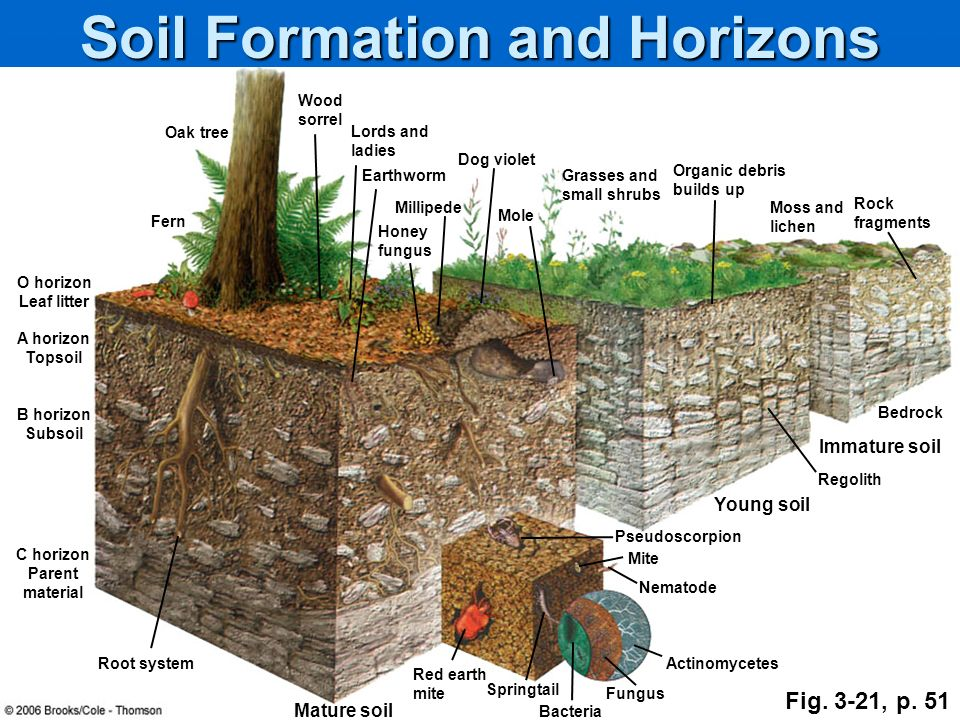 Ecosystems what are they and how do they work ppt for Origin and formation of soil