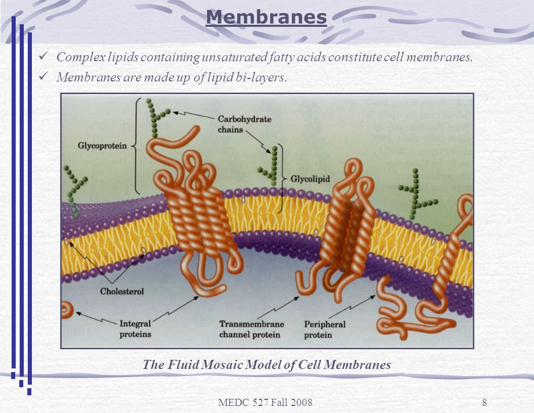 The Fluid Mosaic Model of Cell Membranes