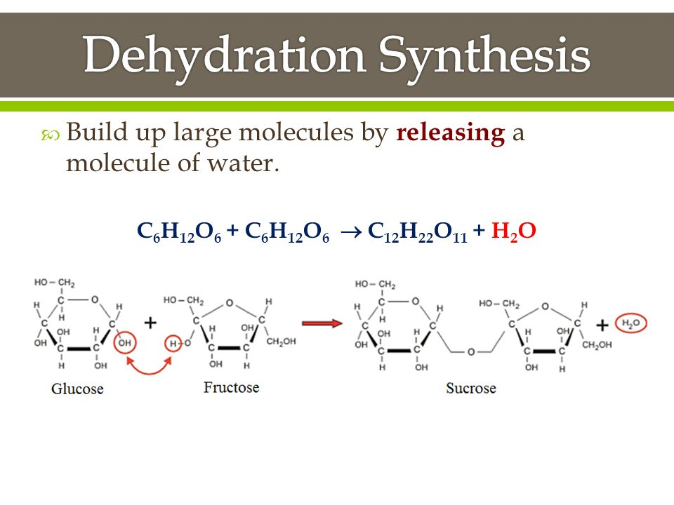 dehydration sysnthesis