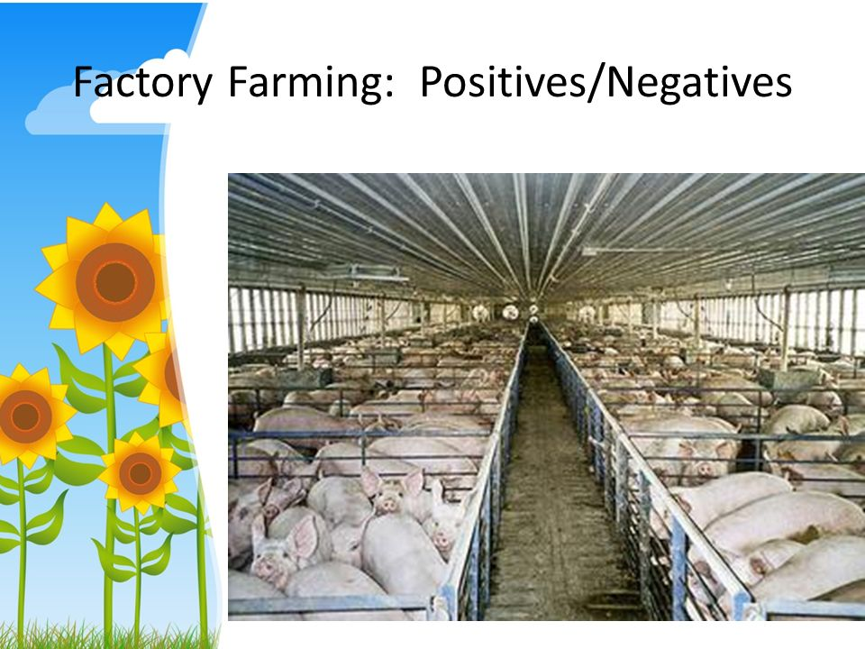 negative factory farming essay Intensive livestock farming, also called factory farming,  sustainable intensive farming practices have been developed to  many of the negative effects of.
