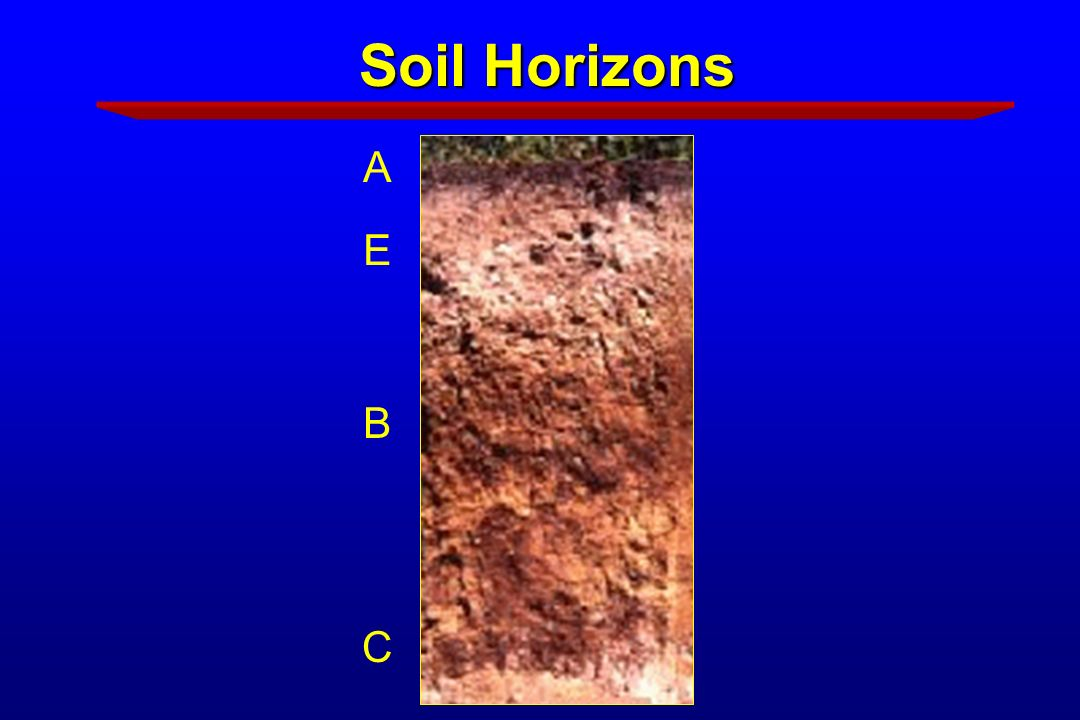 Soil science for master gardeners ppt download for Soil horizons