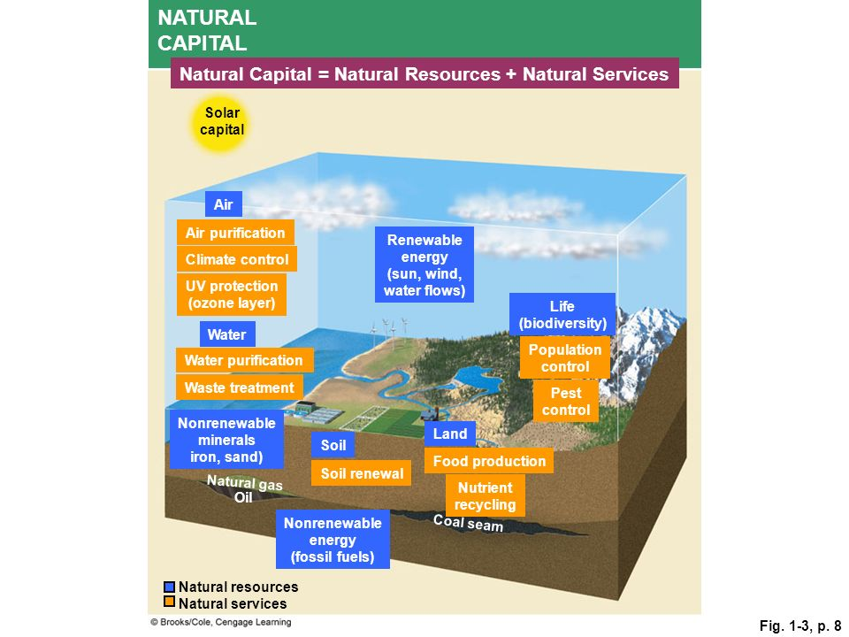 NATURAL CAPITAL Natural Capital = Natural Resources + Natural Services