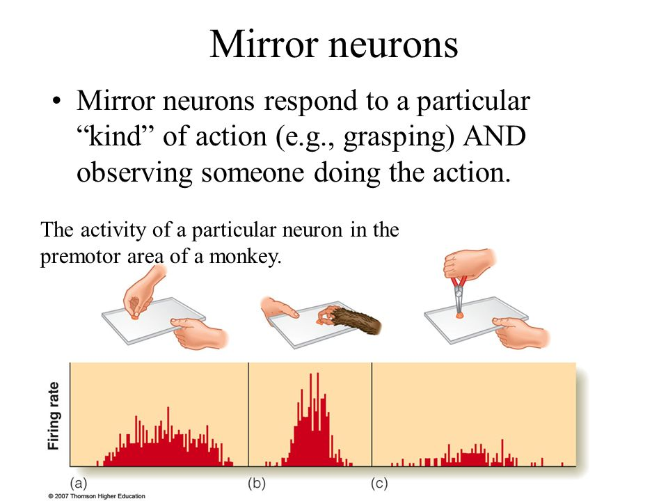 Sensation perception ppt download for Mirror neurons psychology definition