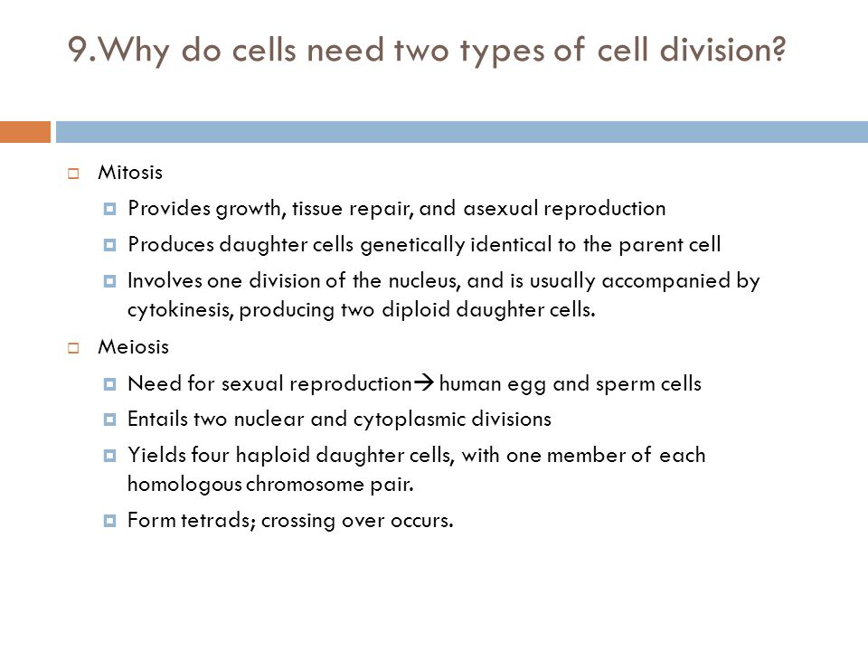 Why is mitosis a form of asexual reproduction images 38