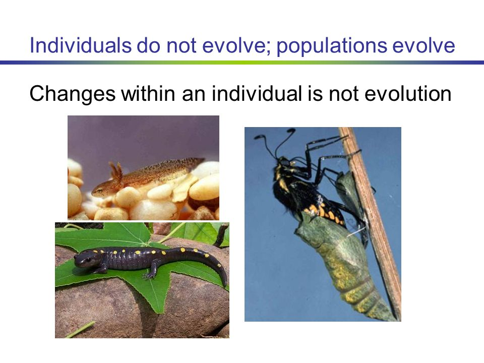 Why Does Natural Selection Occur To Populations And Not Individuals