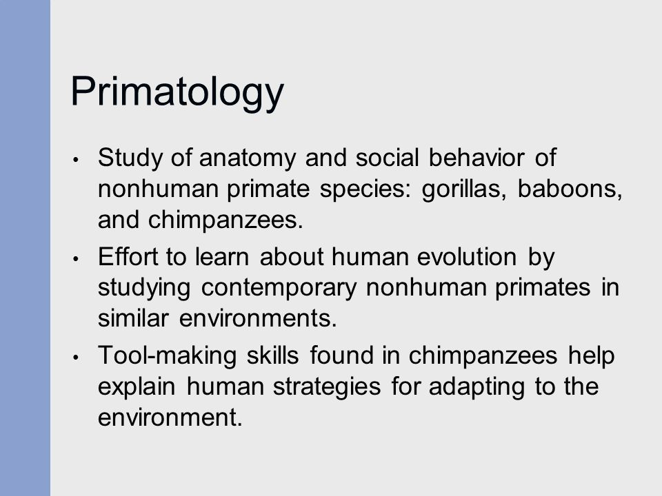 biological anthropology analysis of the gorilla Michelle sauther  faculty: biological anthropology  biological anthropology  it's like comparing a gorilla to a baboon and one would expect the two species .