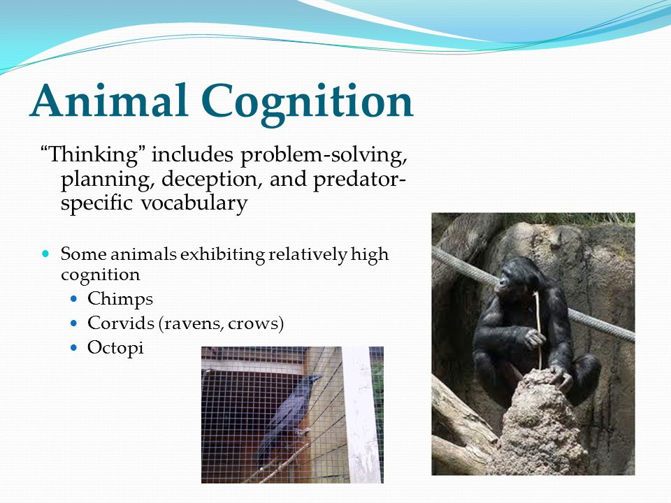 Animal Cognition Thinking includes problem-solving, planning, deception, and predator-specific vocabulary.