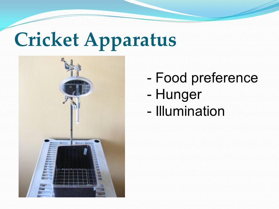 Cricket Apparatus - Food preference Hunger Illumination