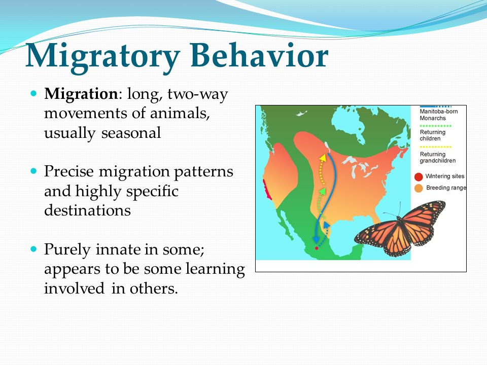 Migratory Behavior Migration: long, two-way movements of animals, usually seasonal. Precise migration patterns and highly specific destinations.