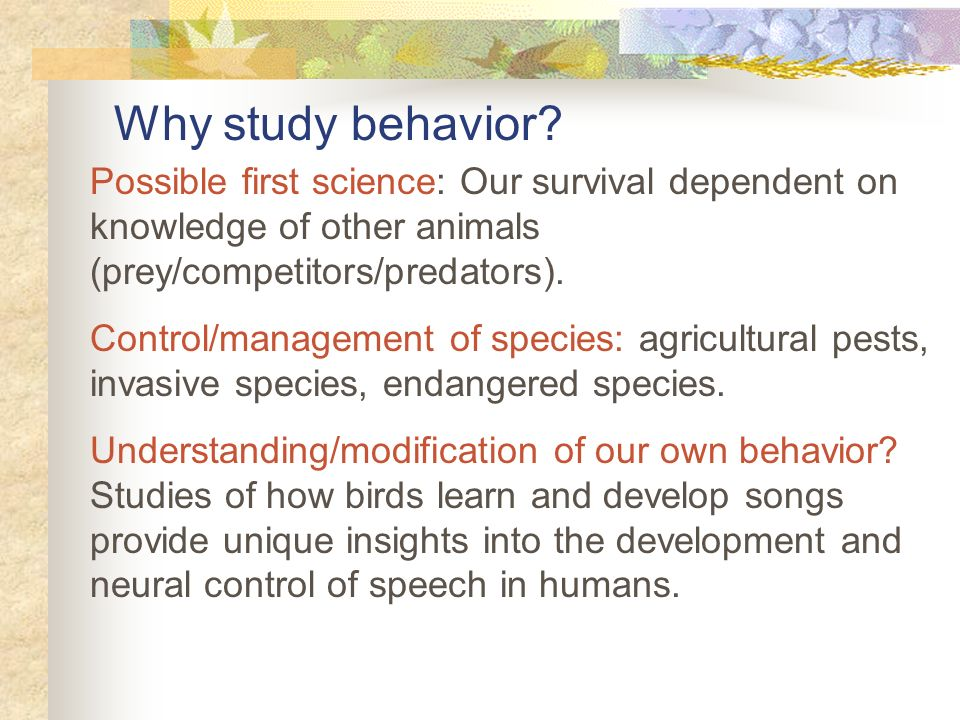 the science and study of animal behavior Animal behavior animal behavior programs are generally graduate level courses of study that a student can pursue after completing an undergraduate degree in biology, psychology, animal science, or a related field.