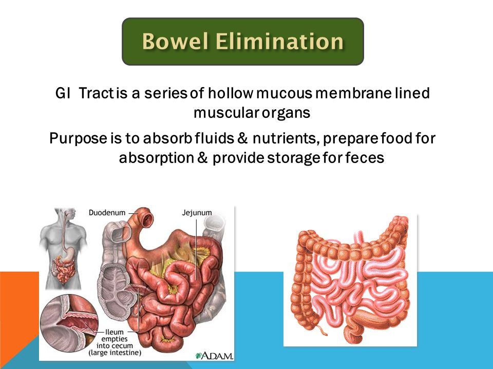 The Bowel Anatomy