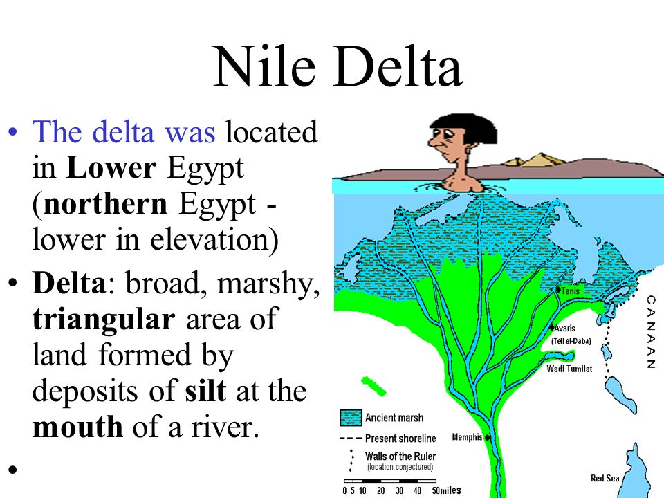 Nile Delta The delta was located in Lower Egypt (northern Egypt - lower in elevation)