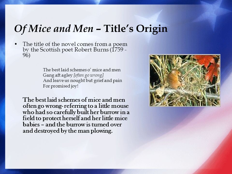 of mouse and man novel essay I have a essay on the meaning of the poem ( to a mouse) and comparison to the novel (of mice and men) i need to compare and contrast the two pieces of.