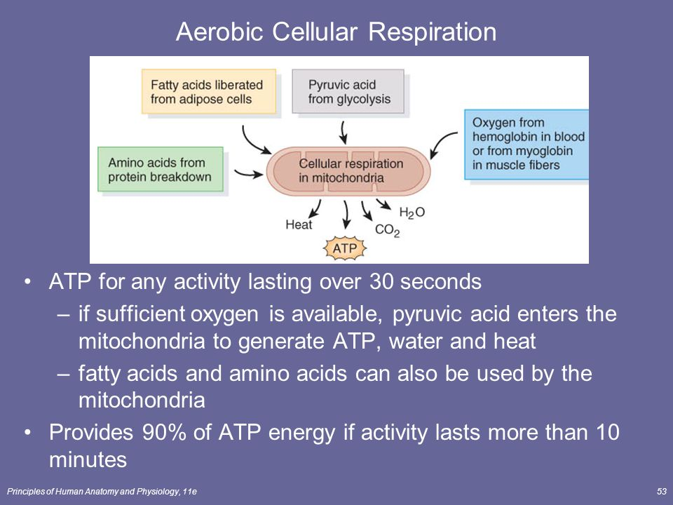principles of cellular respiration Cellular respiration occurs in the cytosol of the cell and it begins with glycolysis glycolysis is the first cycle of reactions in cellular respiration this is the process of breaking glucose into two molecules.
