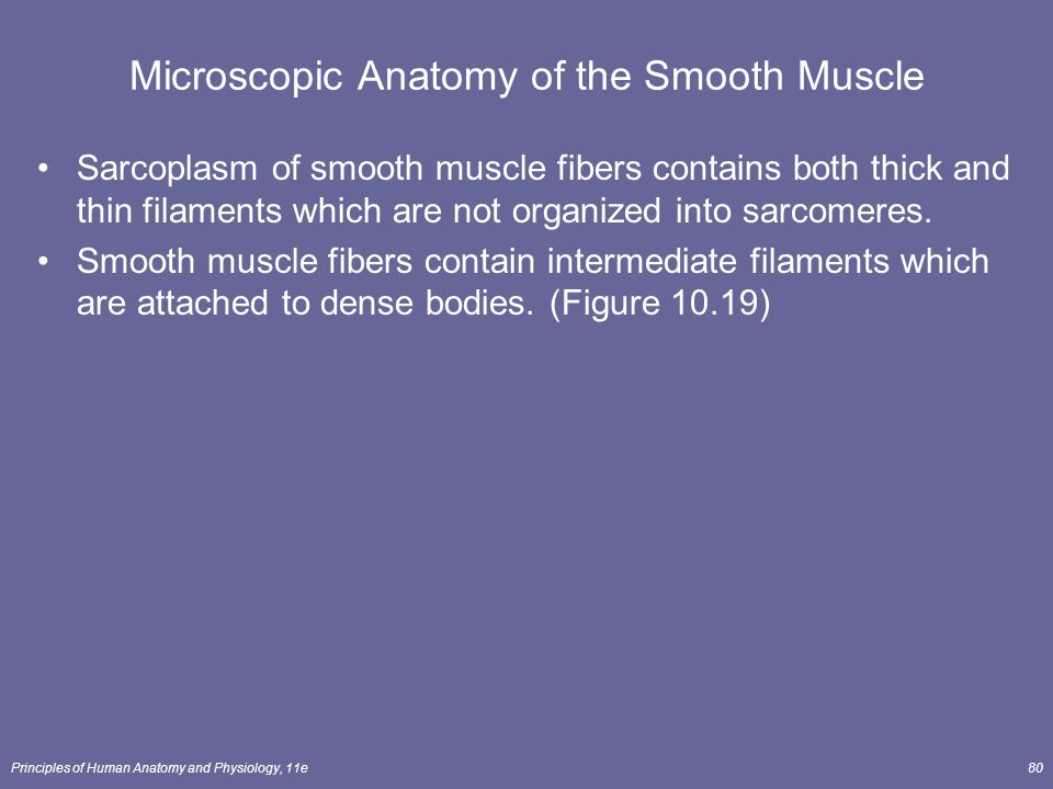 muscle tissue lecture outline - ppt download, Muscles