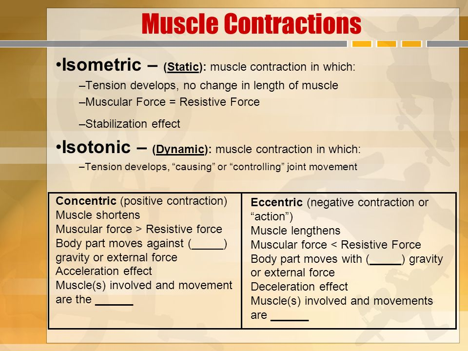 isotonic contraction and the effect of Muscle contractions are classified as either isotonic or isometric 1 in an isotonic contraction (iso=equal tonic= tension), the tension (force of contraction) what is difference between isotonic and isometric muscle contraction update cancel as the effects of gravity add to the.