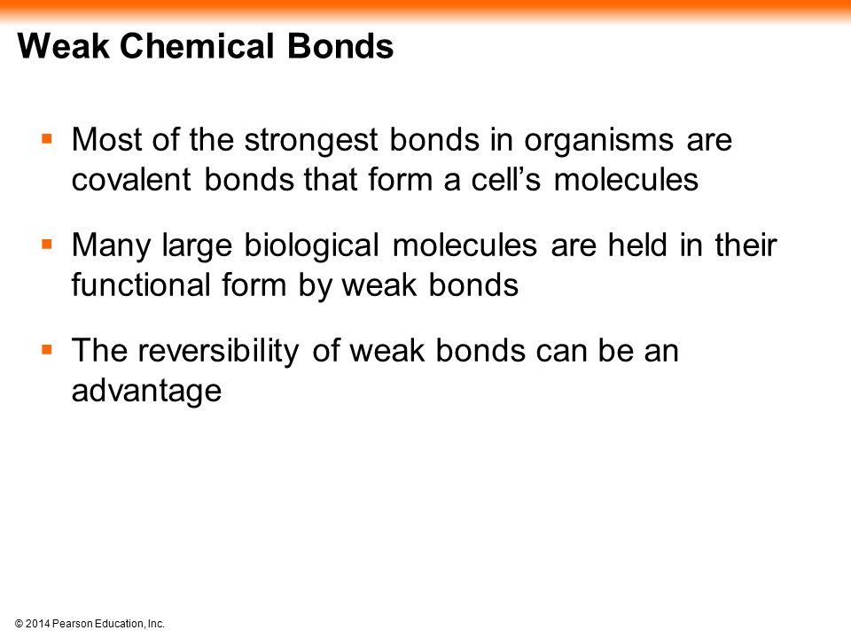 Weak Chemical Bonds Most of the strongest bonds in organisms are covalent bonds that form a cell's molecules.