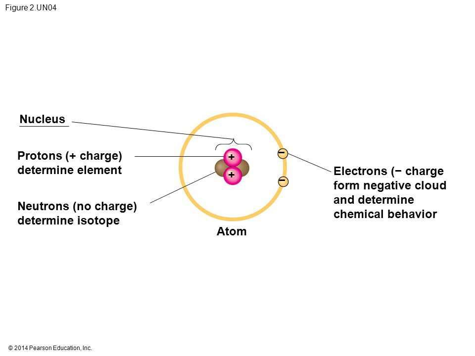 Nucleus − Protons (+ charge) + determine element Electrons (− charge +