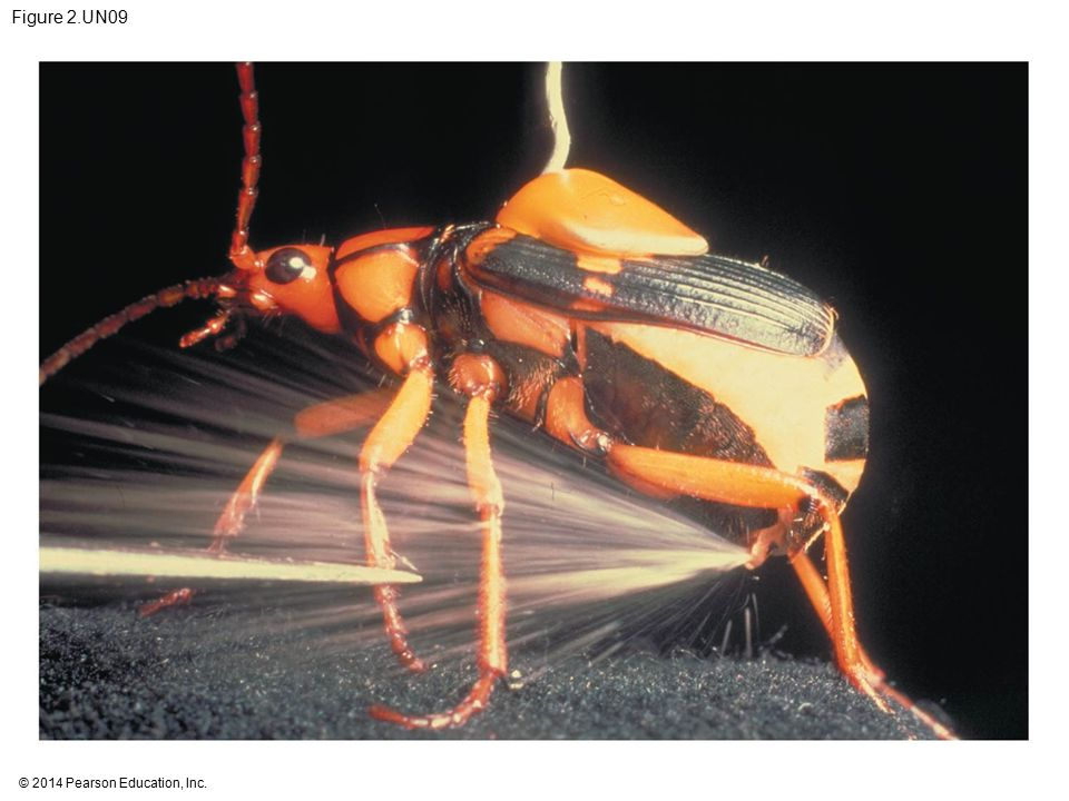 Figure 2.UN09 Figure 2.UN09 Test your understanding, question 13 (bombardier beetle)