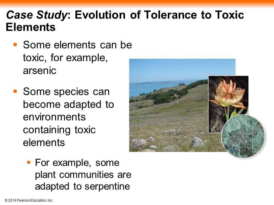 Case Study: Evolution of Tolerance to Toxic Elements