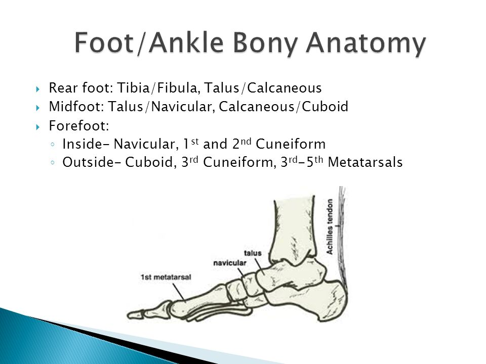 Bony anatomy of the foot 7892725 - follow4more.info