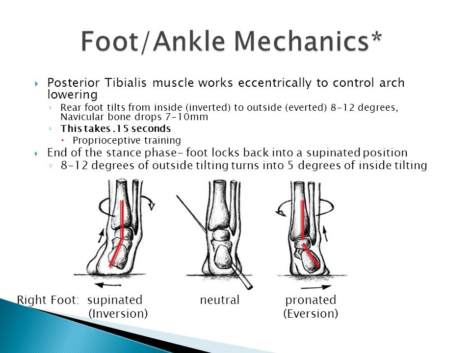 Funky Foot Anatomy Ppt Pictures - Human Anatomy Images ...