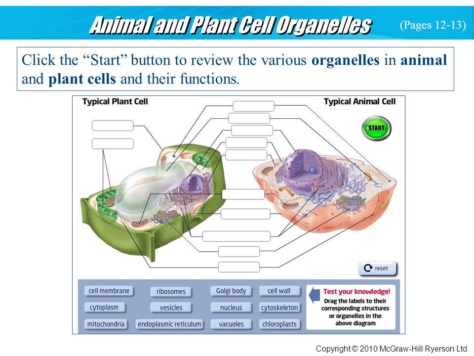 Tissues, Organs, and Systems of Living Things - ppt video