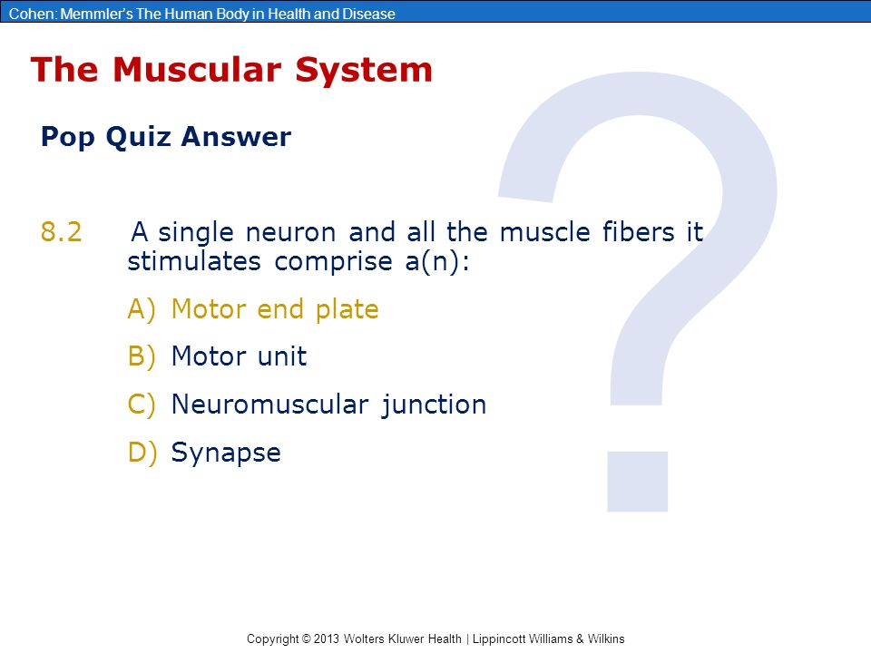Chapter 8: The Muscular System - ppt download