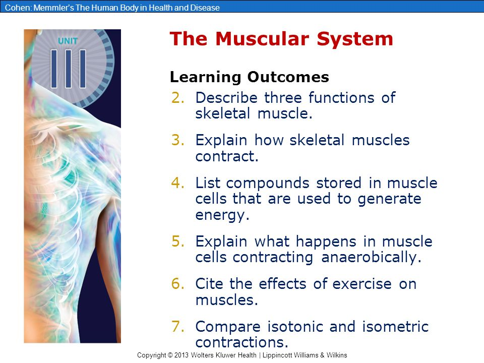 chapter 8: the muscular system - ppt download, Muscles
